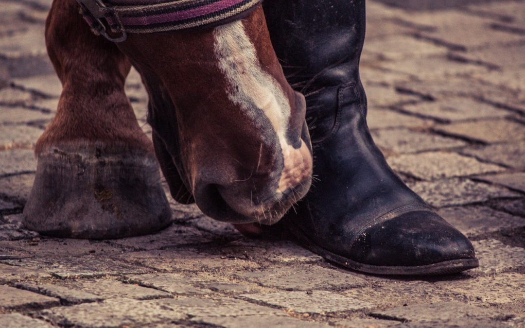 Pas de pied, pas de cheval: expression trop souvent employée ?
